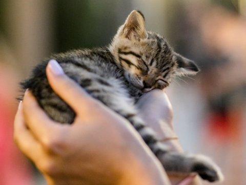 Как привезти домашнее животное в Турцию?